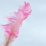 La historia de la pluma por Josemola